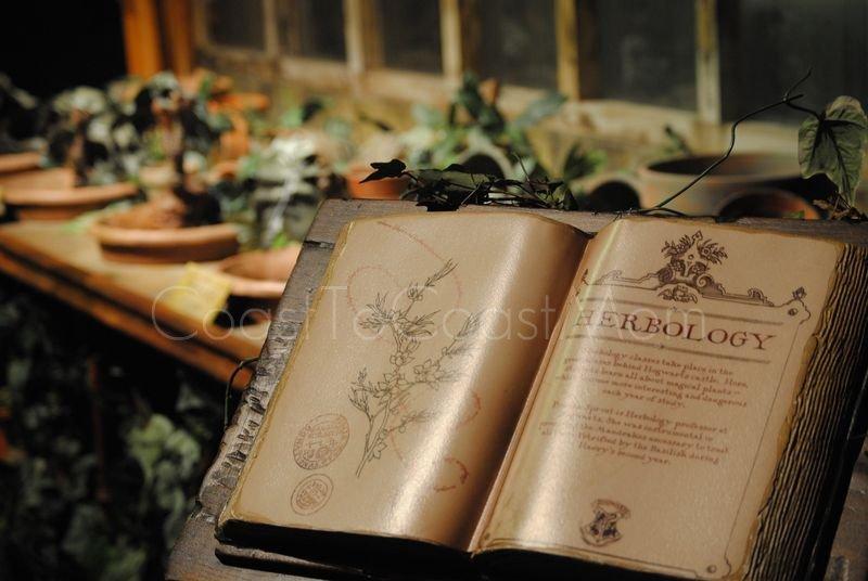 Harry Potter Exhibit Herbology Watermarked