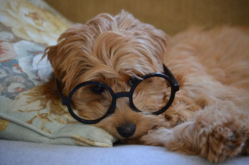 Mr Peabody and Sherman dog with glasses